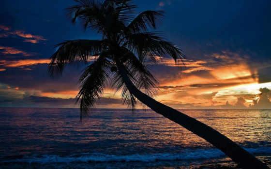 закат, море, пляж, palm, пальмы,