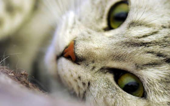 кот, макро, морда