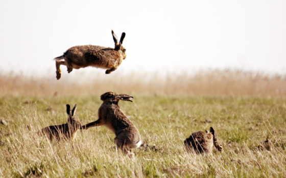 заяц, природа, desktop, ultra, горизонт, поле, да, фон, зайцы, fotos,
