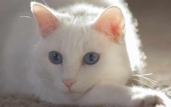 усы, кот, глаза
