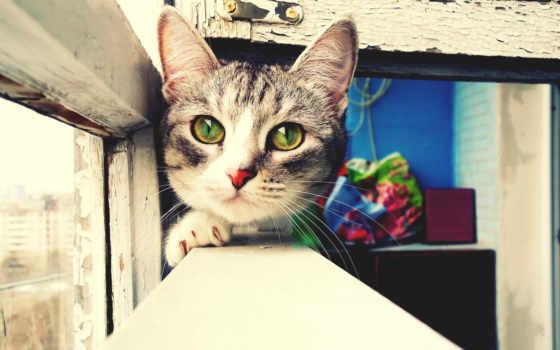 зеленогразый кот