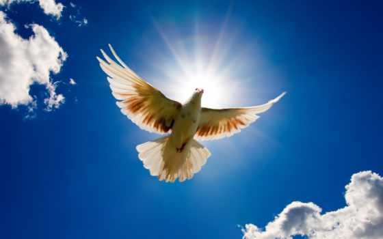 мира, всем, name