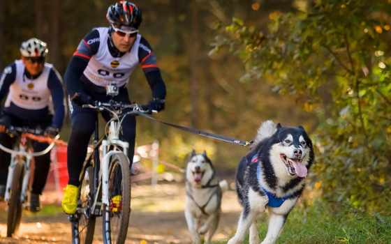 велосипеде, собакой, metropolis, вело, драйв, велосипеда, bike, велосипеды,