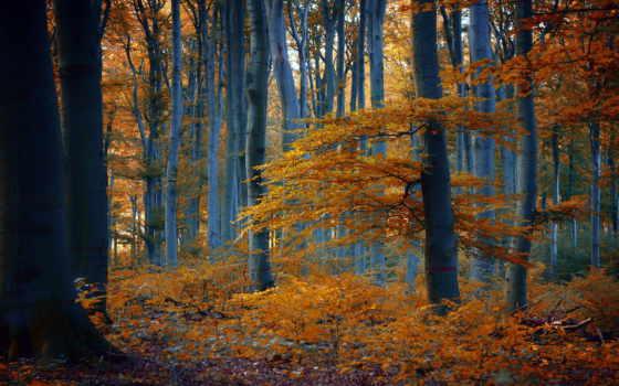 осень, лес, природа, дорога, дерево, тропинка, landscape, пасть, листья, trees, туман,