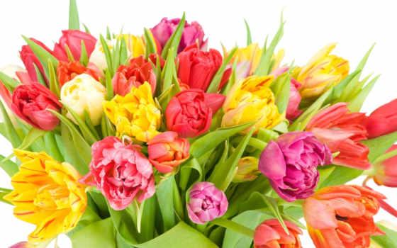 рождения, днем, martha, открытки, страница, поздравления, цветы, праздником, всех,