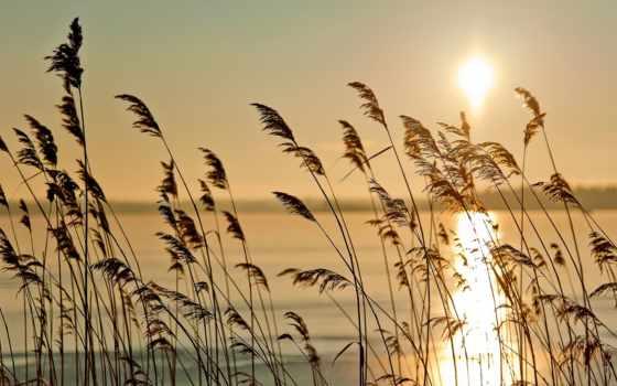 туман, трава, sun