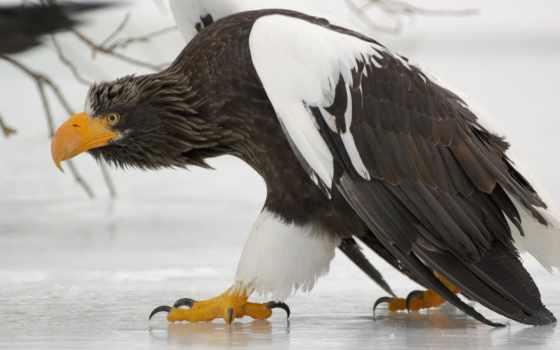 птицы, области, хищные