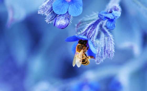 пчелка, цветы, цветке, природа, blue, card, насекомое, макро, яndex,
