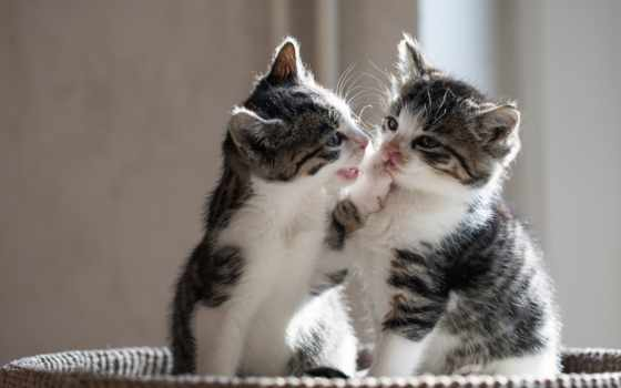 котенок, коллекция, кот, user, тюлень, take, love, cute