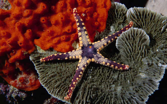 beauty, starfish, mesmerizing, images,