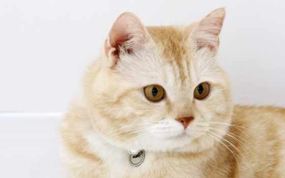 кошки, янв, кот