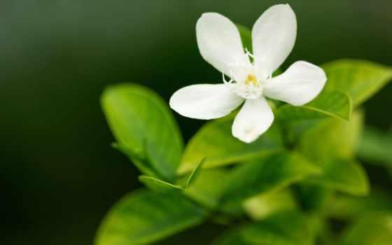 широкоформатные, макро, природа, цветы, лепесток, заставки, зелёный,