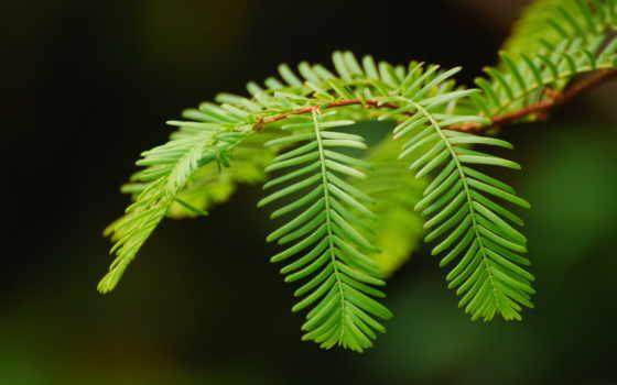 makro, ветка, листья