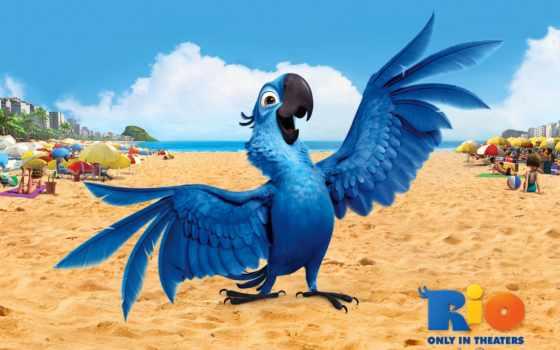 rio, уважаемый, попугай, cartoon, пляже,