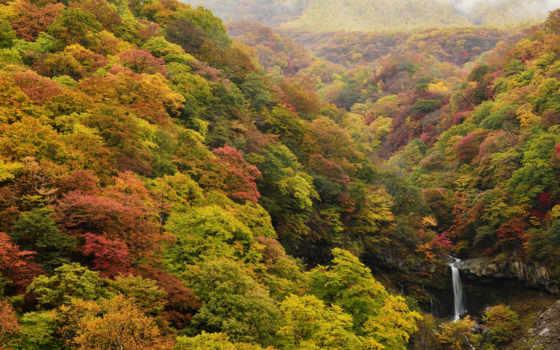 trees, природа, осень, forests, desktop, леса, трава, камни, free,