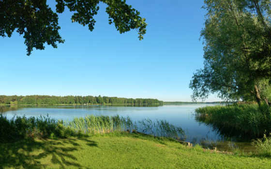 summer, природа, trees, река, трава, камыши,