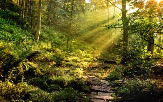 лес, листву, сквозь, природа, деревьев, rays,