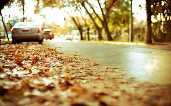 дорога, листва, осень, highway, город, асфальт, автомобили, картинка, природа, желтая,