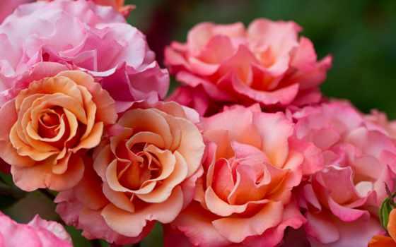 cvety, тебя, тебе, плэйкасты, красивые, картинка,
