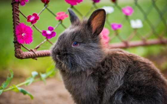 кролик, source, nero, per, scarica, coniglus, soffice, animalus, simpaticus