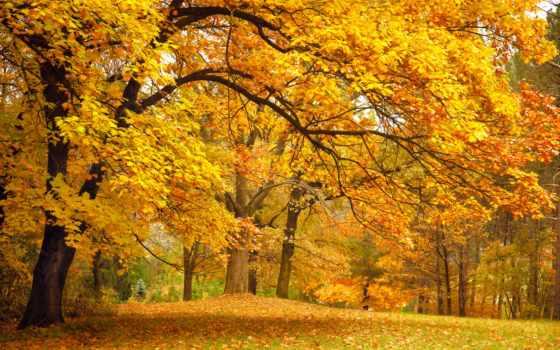 деревья, осень Фон № 33621 разрешение 2560x1600