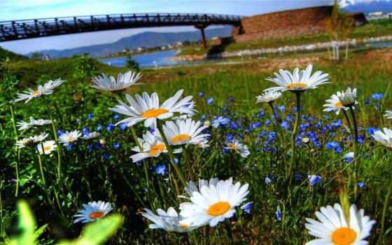 цветы, watch, природа