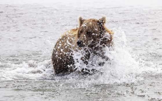 water, животные, für