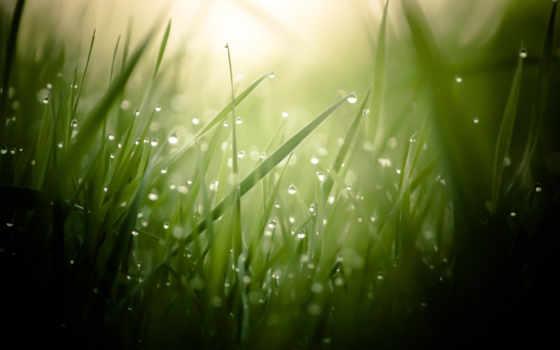 роса, капли, трава, взгляд, макро, лист,
