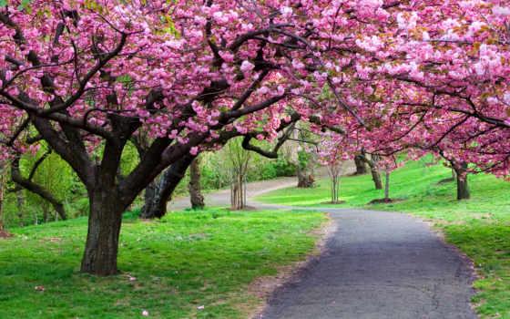 деревя, природа, лес Фон № 98495 разрешение 2507x1600