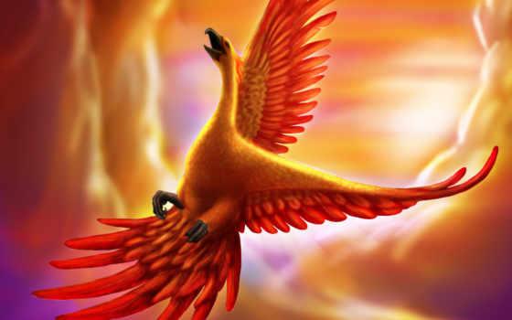 phoenix, птица, art