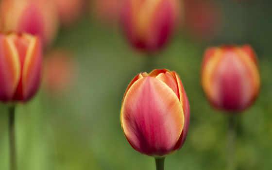 цветы, possible, страница