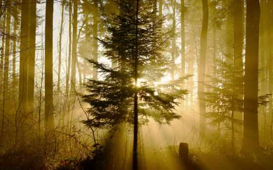 природа, лес, nexus, свет, desktop, смартфона, itc, flickr, abyss,