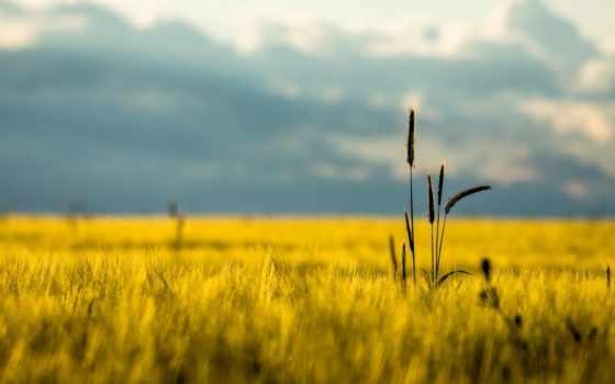 поле, природа, колоски, колосья, макро, summer, небо, margin, красивые,