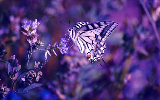 purple, cvety, color, цветы, макро, сиреневый, бабочка, нояб, высоком, насекомое, базе,