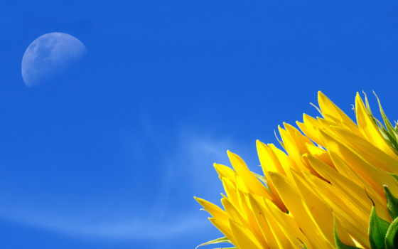 подсолнухи, подсолнух, otoño, ukraine, research, ağustos, качественные, закате, independence, occasion, ukrayna,