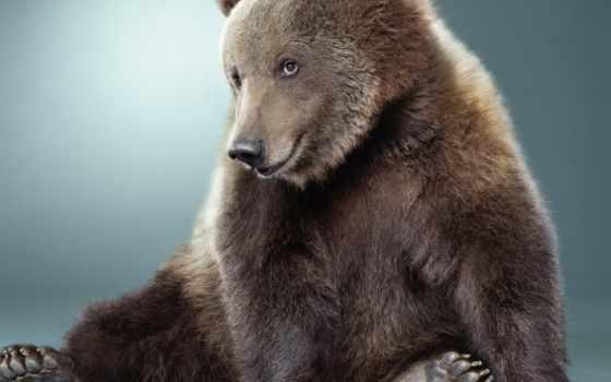 медведь, няшка