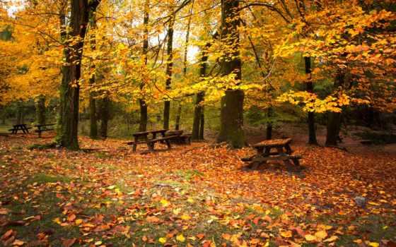 скамейки, лес, осень, листва, деревья, листья, опавшие, парке, осенние, картинка,