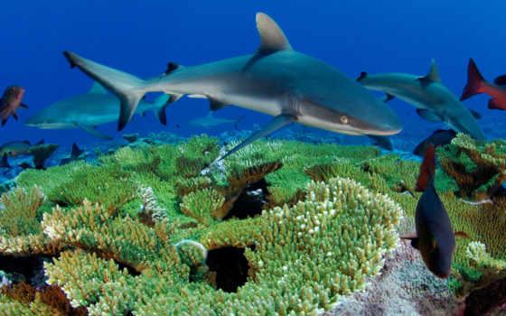 рыбы, море, животные