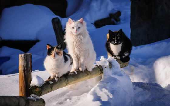 коты, winter, трио