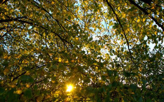 national, geographic, осень, листва, sun, листья, лучи, природа, дерево, ветки,
