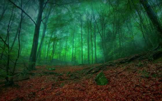 лес, зелёный, mystical