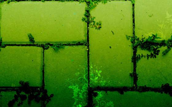 зелёный, текстура, растения, art, ростения, текстуры,