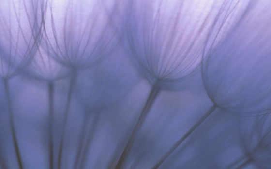 одуванчик, цветок Фон № 12624 разрешение 1920x1200