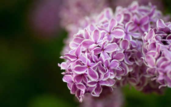 flowers, цветы, admin
