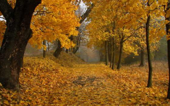 аллея, листья, осень