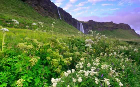 горы, цветы, трава