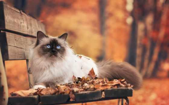 осень, кошки, листва, скамейка, zhivotnye, кот,