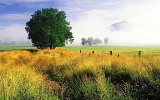 профессиональны, трава, фотографий, дымке, knee, горы, природа,