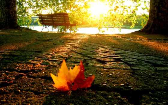осень, природа, subah, заставки, осенние,