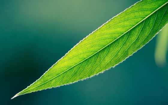 herbaceous, plants,
